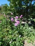 Bouquet garni ist kein schöner Blumenstrauß